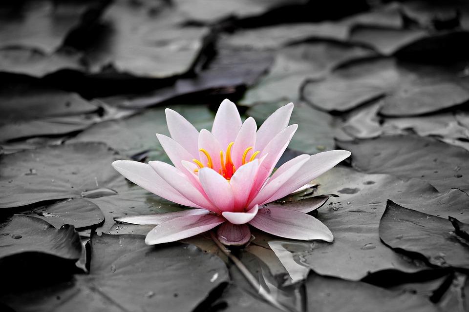Ukens lederkommentar – Om rosa oppturer, mørke nedturer og sløve kulturer