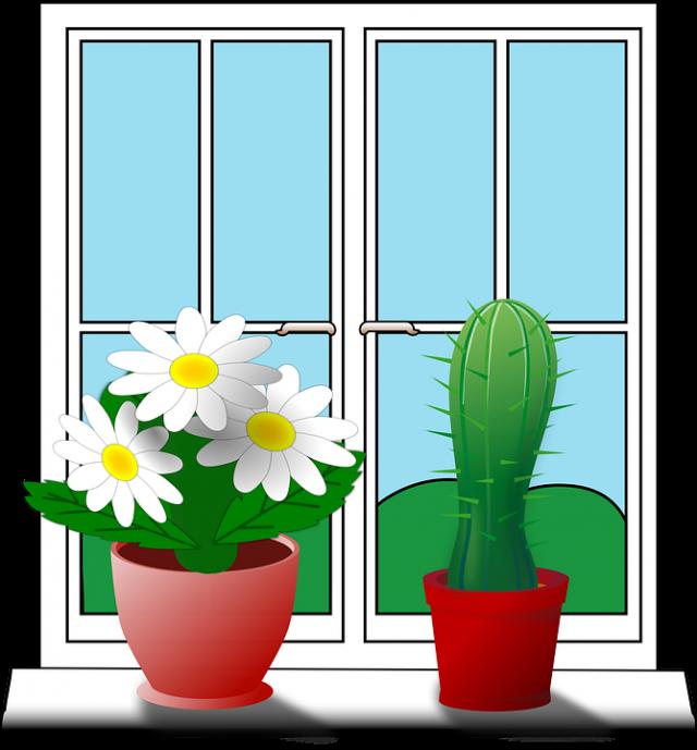 Og mottakerne av ukens Innovasjonsblomst og kaktus er…